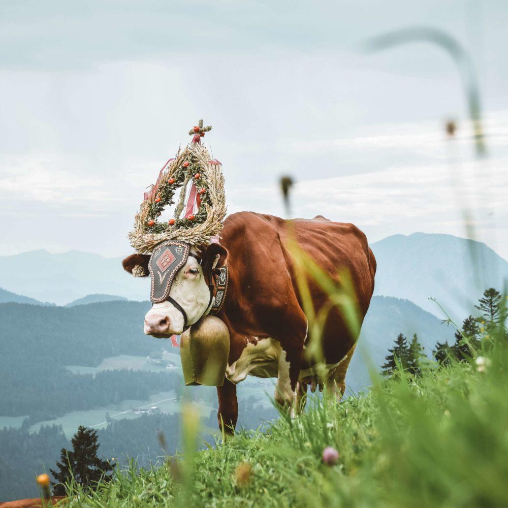 Digitaler Tourismusindex Österreich 2019